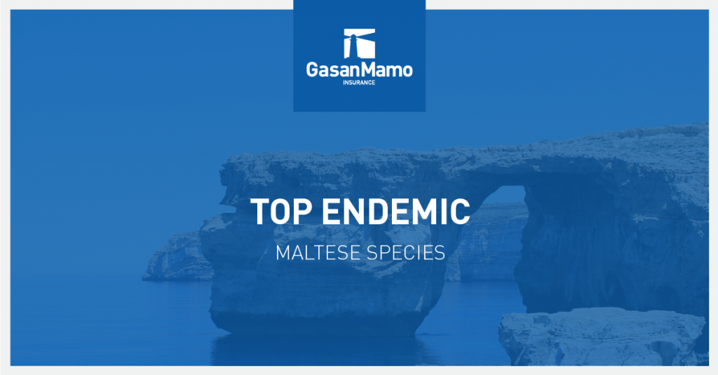 GasanMamo Insurance - Top Endemic Maltese Species