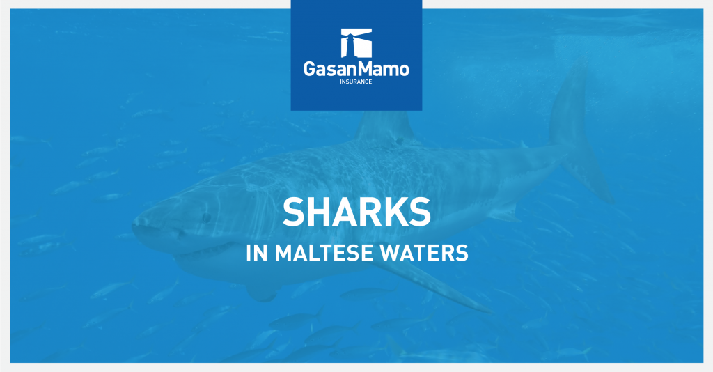 GasanMamo Insurance - Sharks in Maltese Waters