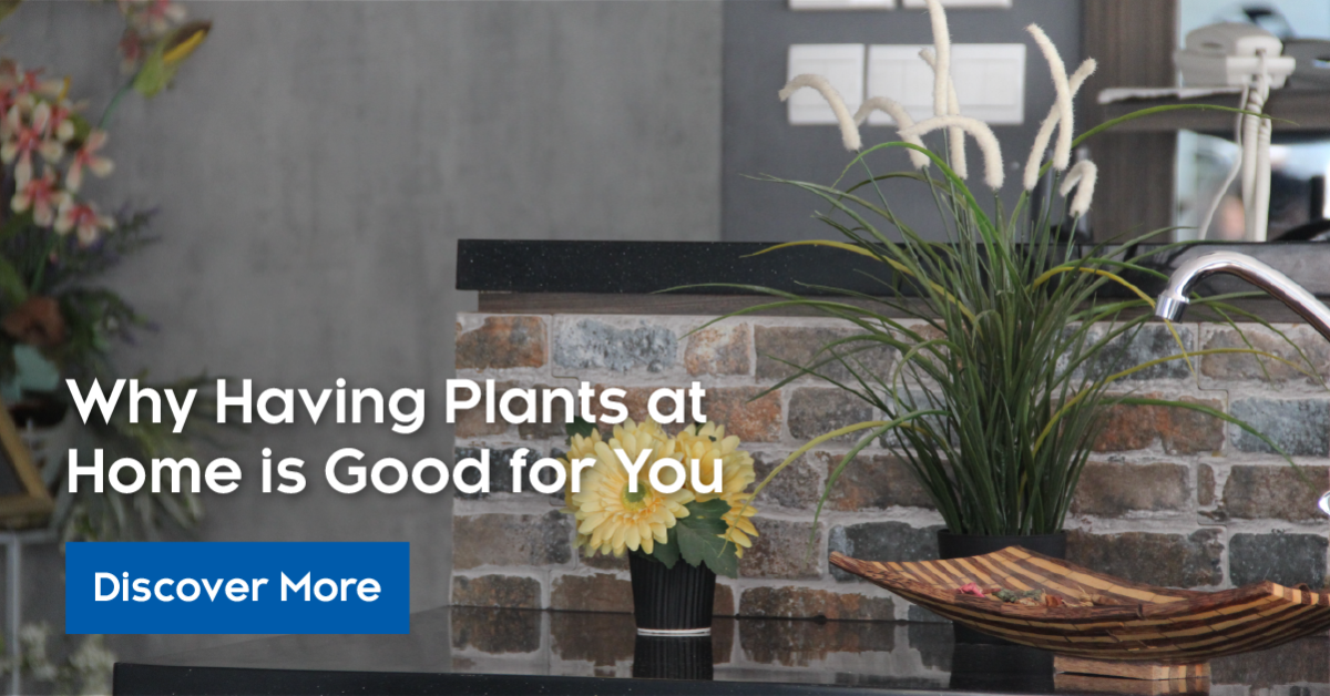 plants-at-home